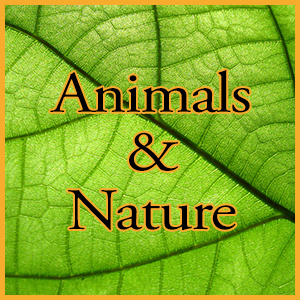 animals nature 300